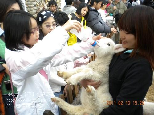 2011 春 清境農場 013.jpg