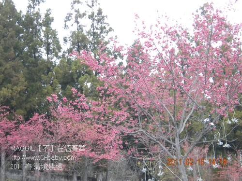 2011 春 清境農場 004.jpg