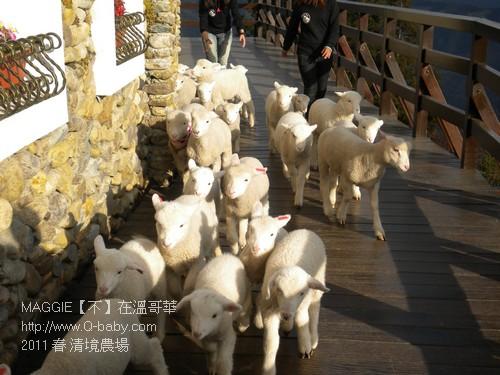 2011 春 清境農場 020.jpg