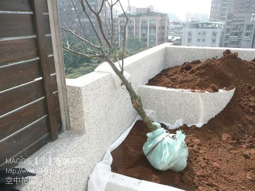 空中花園 11.jpg