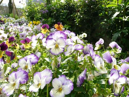 空中花園 16.jpg