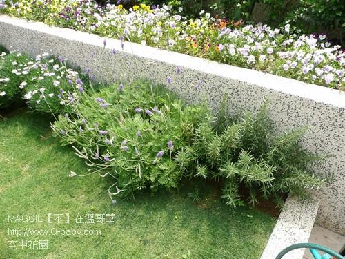 空中花園 17.jpg