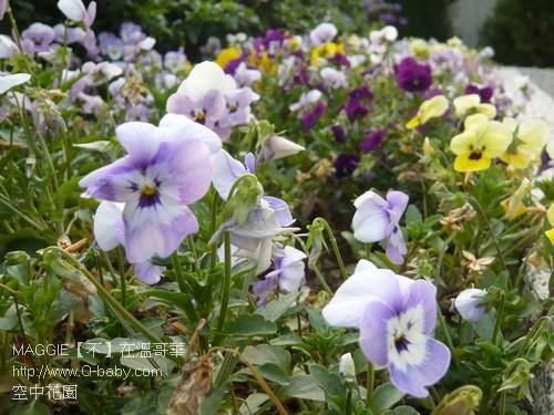 空中花園 18.jpg