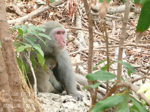 爬柴山看小猴 02.jpg
