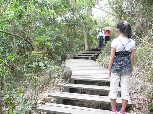 爬柴山看小猴 04.jpg
