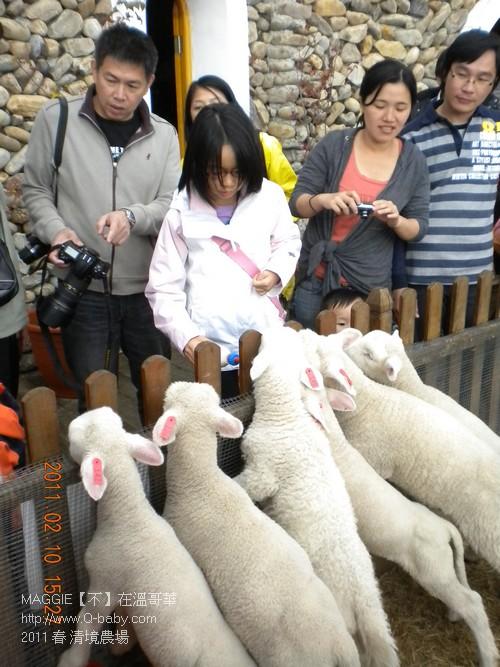 2011 春 清境農場 009.jpg