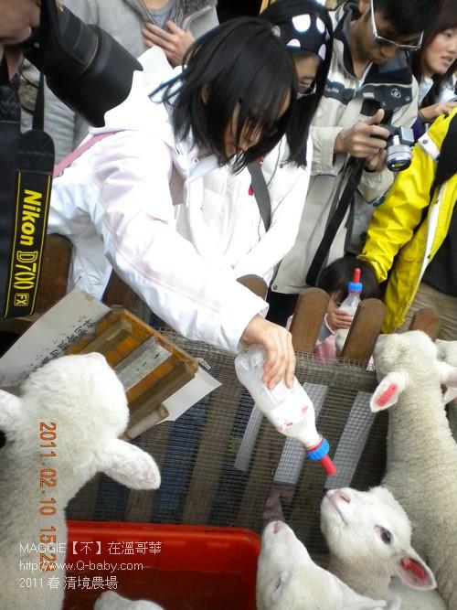 2011 春 清境農場 011.jpg
