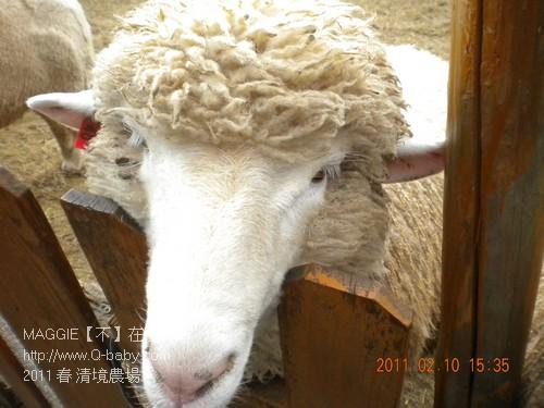 2011 春 清境農場 016.jpg