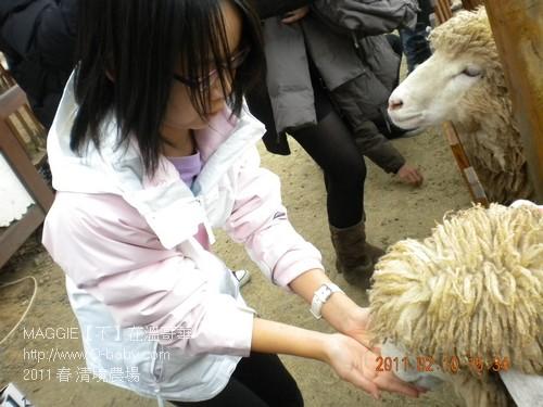 2011 春 清境農場 014.jpg