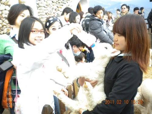 2011 春 清境農場 012.jpg