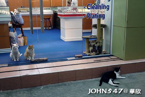 泰國華欣 三隻貓