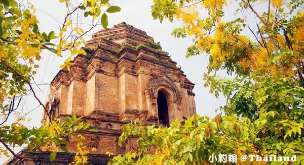 清邁自由行- Wat Chedi Luang Worawihan柴迪隆寺 大佛塔寺 聖隆骨1.jpg