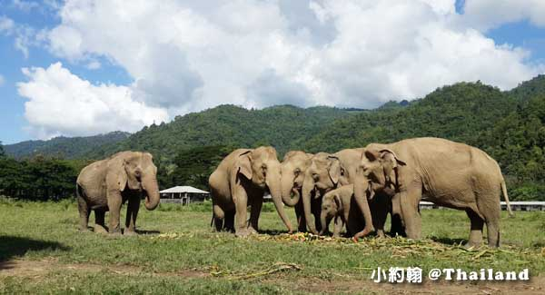 泰國清邁Elephant Nature Park - Day Tours大象自然公園