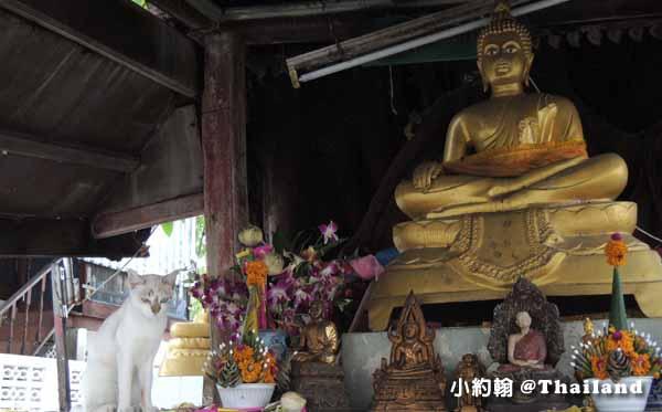 泰國曼谷- 佛寺與咪