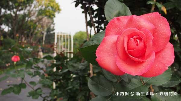 新生園區春季玫瑰花園-紅色.jpg