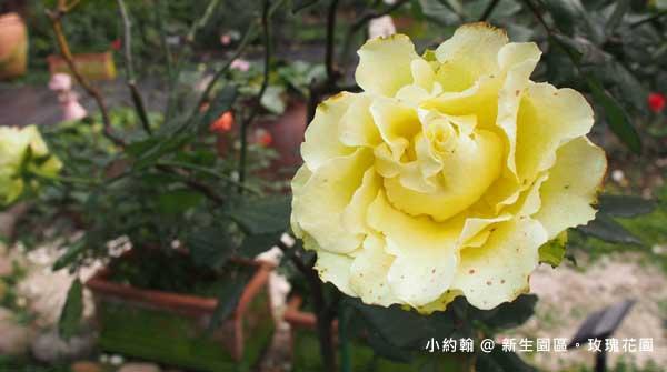 新生園區春季玫瑰花園-綠色行星.jpg