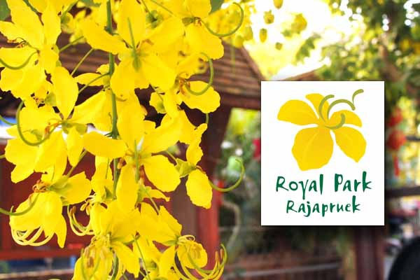 清邁花博Royal Park Rajapruek-Cassia fistula 阿勃勒Golden Shower flower黃金雨