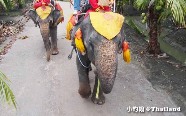 泰國騎大象Chang Puak Camp Elephant ride叢林騎大象體驗