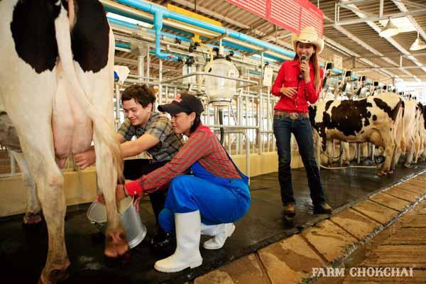 泰國考艾最大畜牧農場 Farm Chokchai 做冰淇淋,騎馬,擠牛奶1.jpg