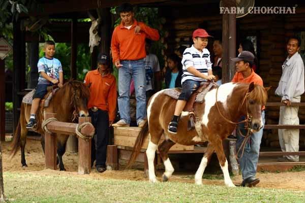 泰國考艾最大畜牧農場 Farm Chokchai 做冰淇淋,騎馬,擠牛奶.jpg