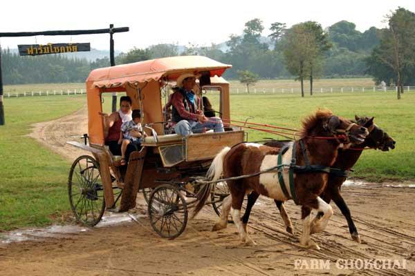 泰國考艾最大畜牧農場 Farm Chokchai 做冰淇淋,騎馬,擠牛奶2.jpg