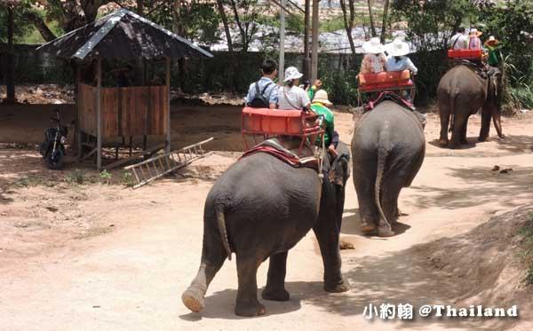 泰國曼谷-泰國七天六夜自由行-曼谷幫-芭達雅一日遊暹羅象園叢林騎大象.jpg