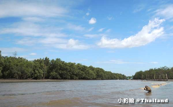 Khlong khone紅樹林生態保護區種水猴子.jpg