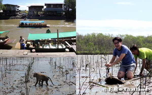 泰國8天7夜(下)綠色旅遊 第一天Khlong khone紅樹林生態保護區種水筆仔.jpg