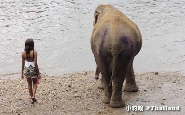 泰國甘加那汶里Kanchanaburi大象世界 受槍傷