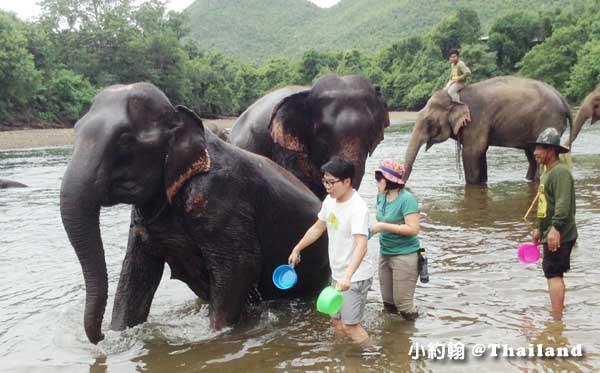 泰國大象世界Elephants World為大象工作@Kanchanaburi1.jpg