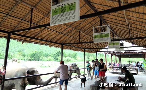 泰國大象世界Elephants World為大象工作@Kanchanaburi3.jpg