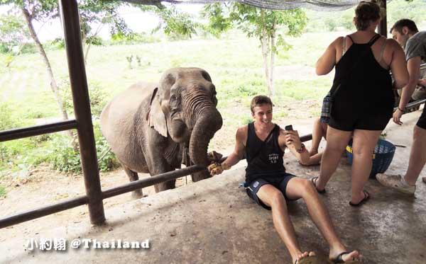 泰國大象世界Elephants World為大象工作@Kanchanaburi6.jpg