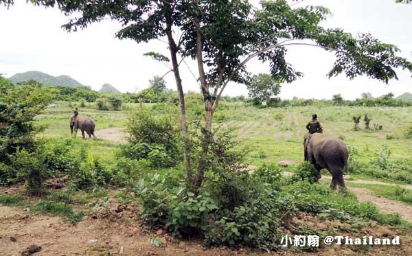 泰國大象世界Elephants World為大象工作@Kanchanaburi8.jpg