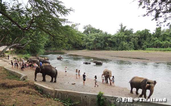 泰國大象世界Elephants World為大象工作@Kanchanaburi10.jpg