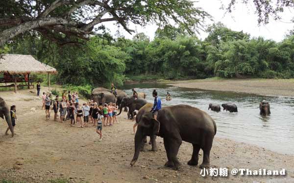 泰國大象世界Elephants World為大象工作@Kanchanaburi11.jpg