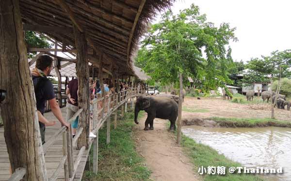 泰國大象世界Elephants World為大象工作@Kanchanaburi16.jpg