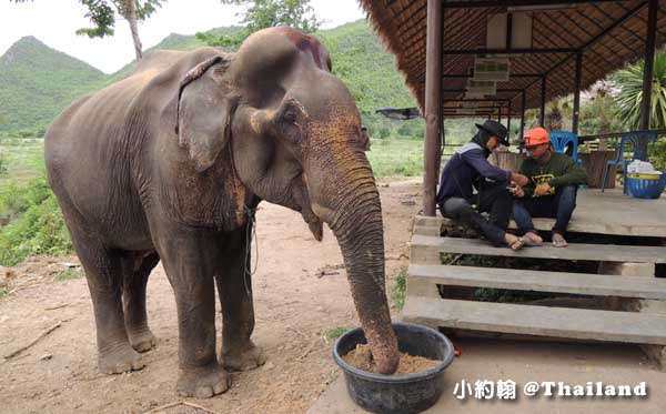 泰國大象世界Elephants World為大象工作@Kanchanaburi18.jpg