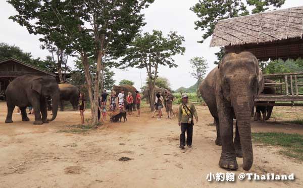 泰國大象世界Elephants World為大象工作@Kanchanaburi21.jpg