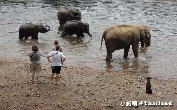 泰國大象世界Elephants World為大象工作@Kanchanaburi大象洗澡.jpg