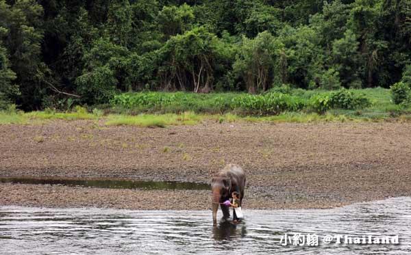 泰國大象世界Elephants World為大象工作@Kanchanaburi大象洗澡2.jpg
