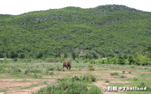 泰國大象世界Elephants World為大象工作@Kanchanaburi大象媽媽.jpg