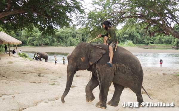 泰國大象世界Elephants World為大象工作@Kanchanaburi象夫.jpg