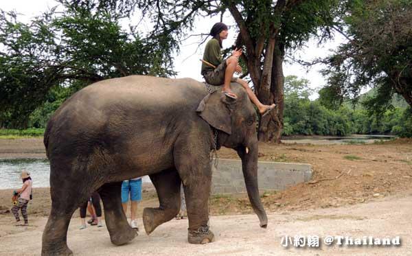 泰國大象世界Elephants World為大象工作@Kanchanaburi象夫2.jpg