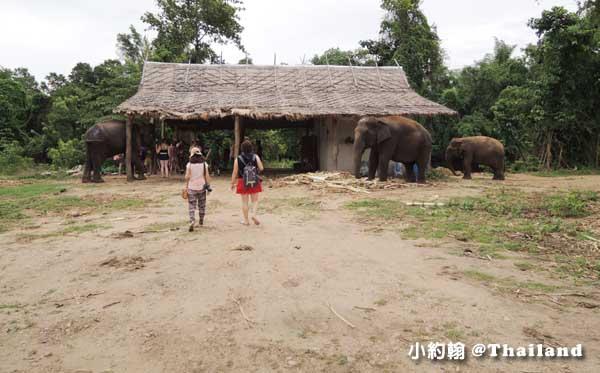 泰國大象世界Elephants World為大象工作@Kanchanaburi廚房.jpg