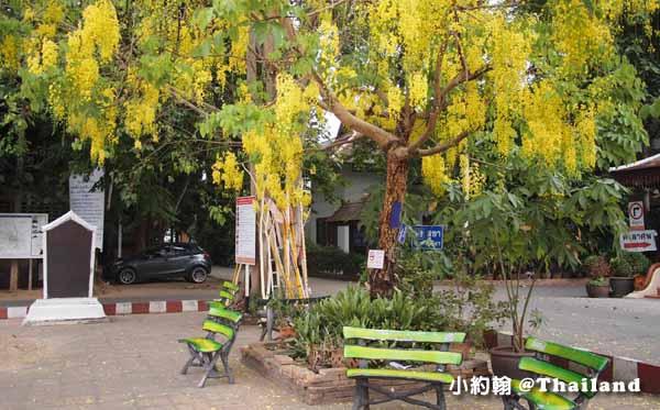 泰國Wat Chedi Luang柴迪隆寺(大佛塔寺,聖隆骨寺.jpg