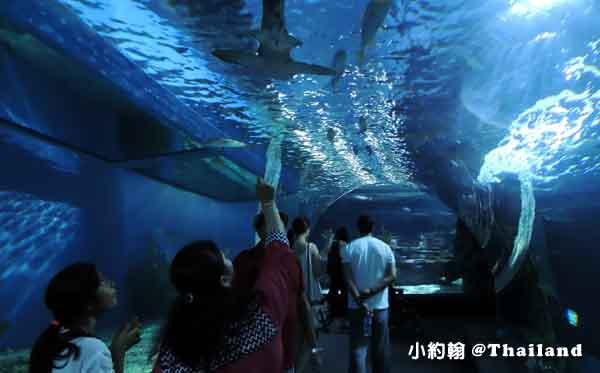 泰國曼谷海洋世界水族館SEA LIFE Bangkok Ocean World暹羅海洋世界