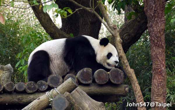 Taipei Zoo-Taipei Must-See