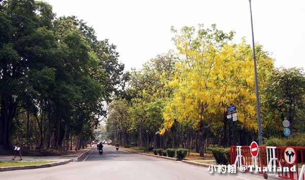 清邁大學Chiang Mai University(CMU)遊園車,電影泰冏3.jpg