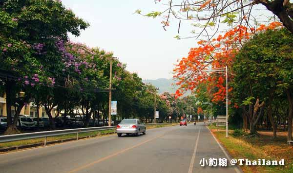 清邁大學Chiang Mai University(CMU)遊園車,電影泰冏4.jpg