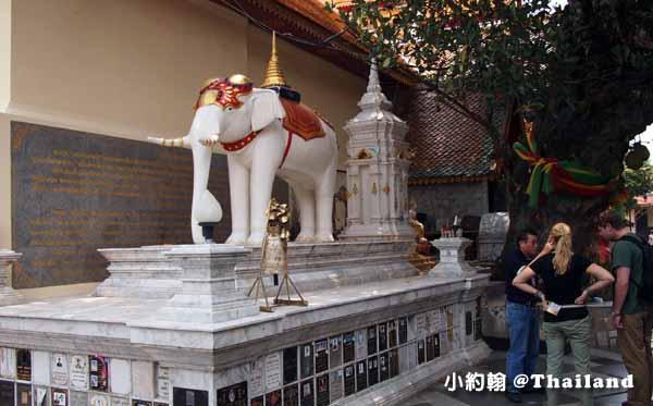 清邁素帖寺Wat Phra That Doi Suthep雙龍寺白象.jpg